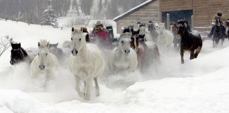 Cválajúce kone, Steamboat Springs